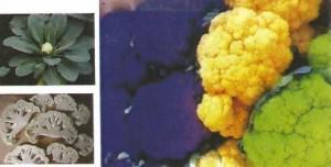 Cauliflower Healthy Snack at Brookeside Montessori School