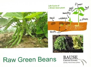 Raw Green Beans Healthy Snack