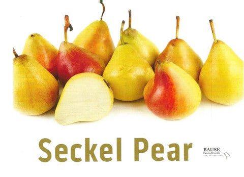 Seckel Pear - Healthy Snack by Bause Catered Events