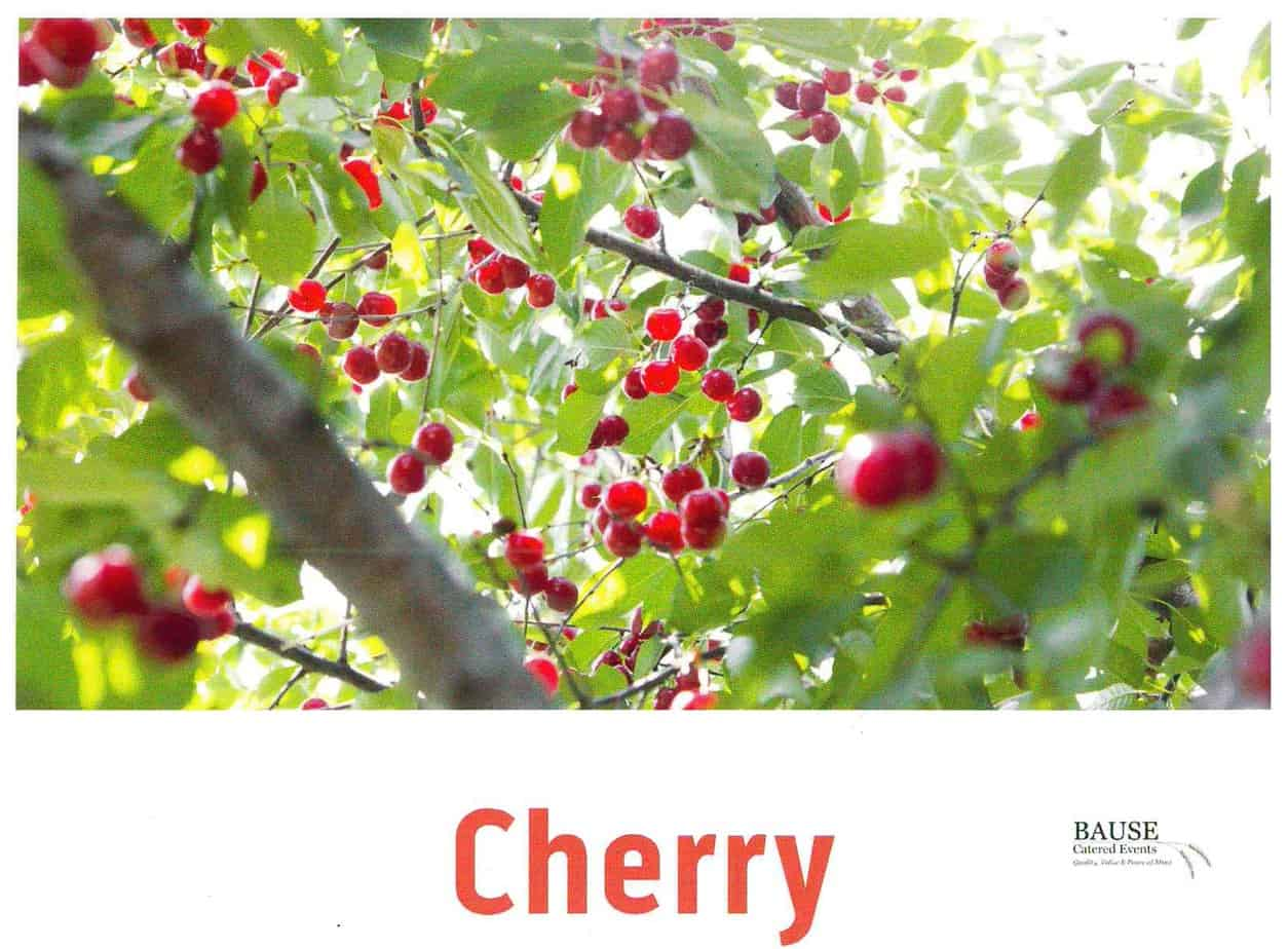 Cherry - Healthy Snack provided by Bause Catered Events in Pottstown with the help of a grant from the Pottstown Area Health and Wellness Foundation.