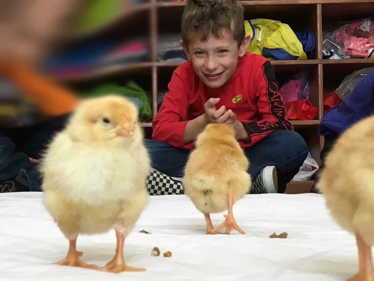 Students watch newly hatched chick - 3