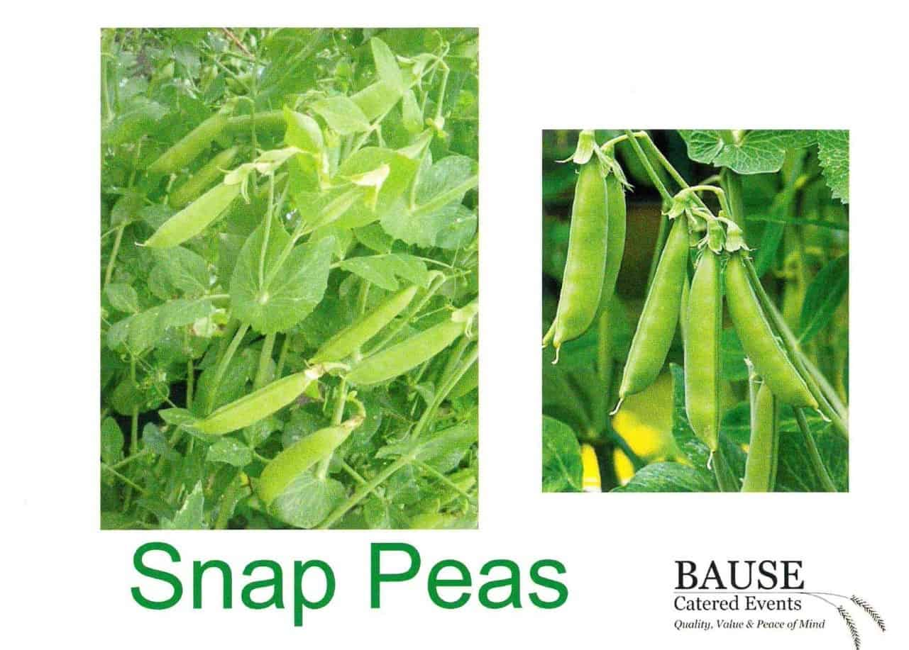 Snap Pea: This Week's Healthy Snack
