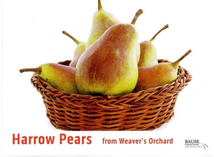 Harrow Pears: this week's healthy snack from Bause Catered Events