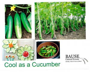 Cucumber - A Healthy Snack